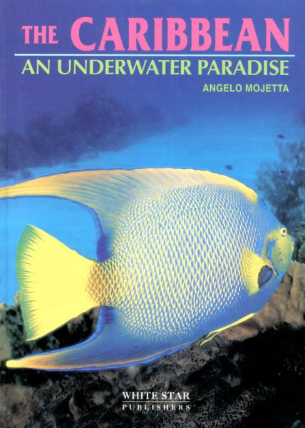The Caribbean an Underwater Paradise
